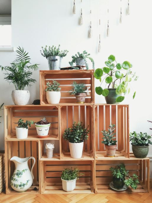 plant stand ideas