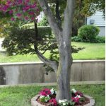 15+ Landscaping Ideas Around Trees | with Rocks, Stones & Flowers